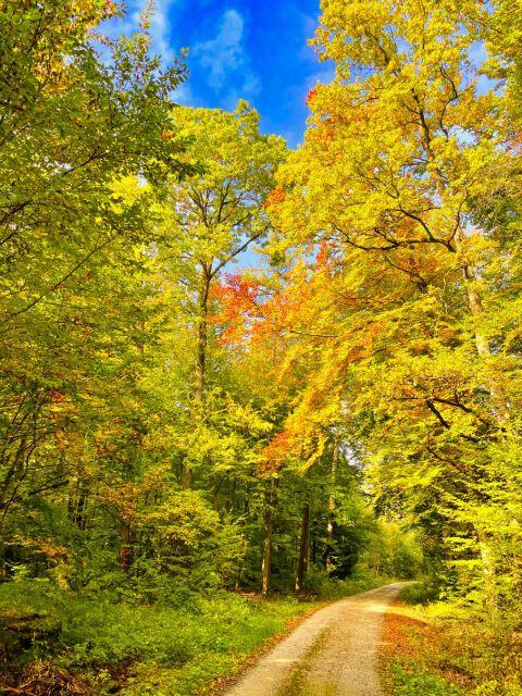 Autumn ways   #photography #autumwoods #autumnleafes #naturfotografie #fotorafie