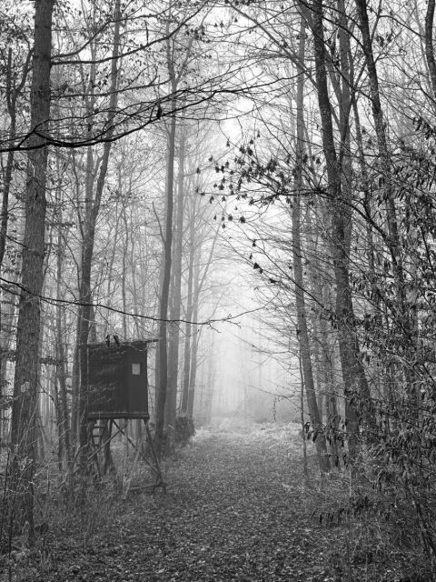 A walk in the fog through the forest #bw #blackandwhite #nature #grey #autumn