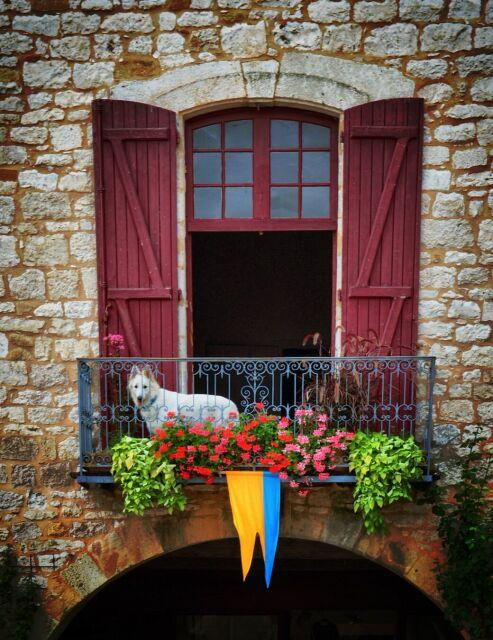 A white dog in Monpazier, Dordogne, France