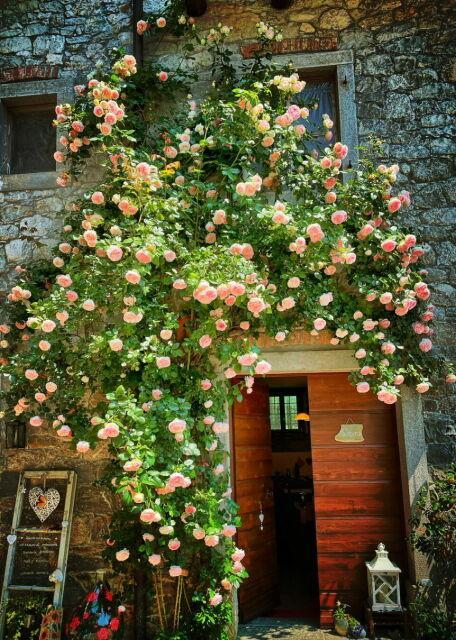 Farmhouse entrance, Friuli, Italy